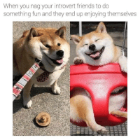 Dank, Friends, and Introvert: When you nag your introvert friends to do  something fun and they end up enjoying themselves