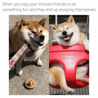 Friends, Introvert, and Love: When you nag your introvert friends to do  something fun and they end up enjoying themselves  aevanwilden i love my friends (and Shibes)