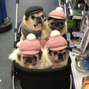Birthday, Memes, and Party: When you need some help with last minute birthday party shopping... you bring along some sisters!!! 👫👭💙💗💗💗 #lastminutedecisions 🤔 #happy15thbirthday🎂 #oliverjames #theodoragrace #maddiekathryn #marleyisabella #letsgetthispartystarted😎 #lovepugsandkisses #bonoshatshop