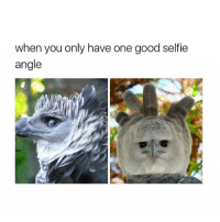 Selfie, Good, and Girl Memes: when you only have one good selfie  angle  ka if this isn't me