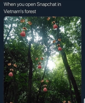 srsfunny:  *fortunate son starts playing*: When you open Snapchat in  Vietnam's forest srsfunny:  *fortunate son starts playing*