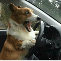 when you out for a long drive and realize you are a dog: when you out for a long drive and realize you are a dog