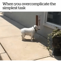 Animal, Spirit, and Dog: When you overcomplicate the  simplest task This dog is my spirit animal 😂