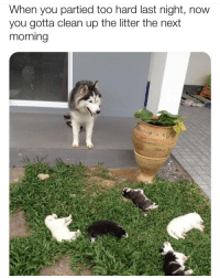 Memes, 🤖, and Next: When you partied too hard last night, now  you gotta clean up the litter the next  morning Looks like a few puppers stayed up too late   @cuteandfuzzybunch