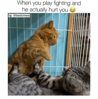 Memes, 🤖, and Got: When you play fighting and  he actually hurt you  ig: a bestvines ⠀ 🌱Things Just Got Serious! 😂