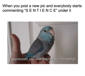 """Appreciate, Friendship, and New: When you post a new pic and everybody starts  commenting """"S ENTIENC E"""" under it  appreciate you and cherish our friendship https://t.co/wsM1XEgwG9"""