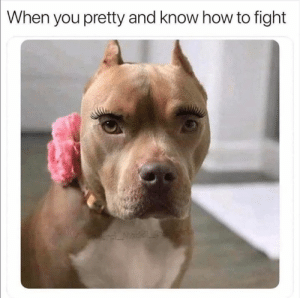 Dank, How To, and Fight: When you pretty and know how to fight  ansi Madel Roof