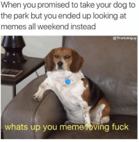 Sorry doggo: When you promised to take your dog to  the park but you ended up looking at  memes all weekend instead  @Thisfuknguy  whats up you meme oving fuck Sorry doggo