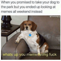 """<p>All weekend long&hellip; via /r/memes <a href=""""http://ift.tt/2qUa2p5"""">http://ift.tt/2qUa2p5</a></p>: When you promised to take your dog to  the park but you ended up looking at  memes all weekend instead  @Thisfuknguy  whats up you meme oving fuck <p>All weekend long&hellip; via /r/memes <a href=""""http://ift.tt/2qUa2p5"""">http://ift.tt/2qUa2p5</a></p>"""
