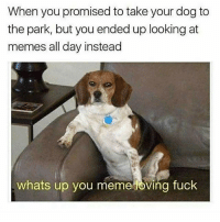 Meme, Memes, and Fuck: When you promised to takeyour dog to  the park, but you ended up looking at  memes all day instead  whats up you meme loving fuck Swipe ➡️ to the end and if you like memes as much as me, you need to follow @thebraintickle 👈