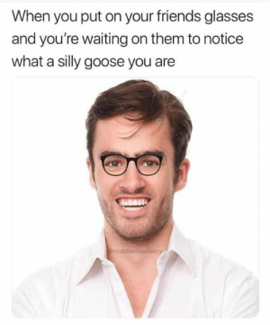 Friends, Memes, and Glasses: When you put on your friends glasses  and you're waiting on them to notice  what a silly goose you are  middlecassfancy