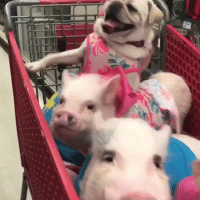 Shopping Hope And Mom When You Put Something In The Cart Your Doesnt Notice Credit ViralHog