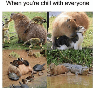Chill, Dank, and Memes: When you re chill with everyone meirl by Logical_Gold MORE MEMES