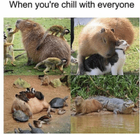 Overly social capybara via /r/wholesomememes http://bit.ly/2UMdqjS: When you re chill with everyone Overly social capybara via /r/wholesomememes http://bit.ly/2UMdqjS