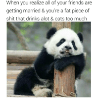 When you realize all of your friends are  getting married & you're a fat piece of  shit that drinks alot & eats too much 🐼🐼🐼 Relax boo, wedding season ain't over yet 😃 😂Rp (@laughsfor_abs) Panda Weddings fluffy chublife lol cute funnyshit single married foodlover