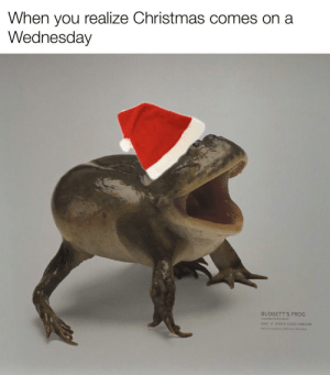 Meirl: When you realize Christmas comes on a  Wednesday  BUDGETT'S FROG  Lepidobatach ueva  2007 STATUS LEAST CONCERN  Na Aguir, Butin Mert Meirl