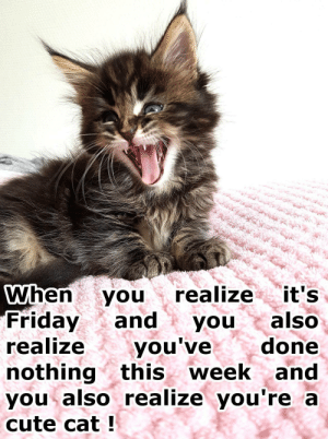 Cute, Friday, and It's Friday: When you realize it's  Friday and youalso  realize youve  nothing this week and  you also realize you're a  cute cat!  done omg-images:  When you realize it's Friday and you also realize you've done nothing this week and you also realize you're a cute cat !
