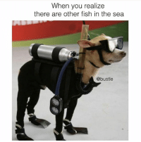 Memes, Fish, and 🤖: When you realize  there are other fish in the sea  @bustle i'm going in