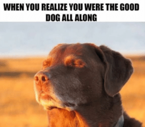 How it feels.  As the rest sniff to you.: WHEN YOU REALIZE YOU WERE THE GOOD  DOG ALL ALONG How it feels.  As the rest sniff to you.