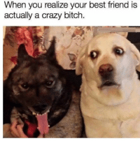 Best Friend, Memes, and Best Friends: When you realize your best friend is  actually a crazy bitch.
