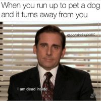 I feel nothing but sadness and pain.: When you run up to pet a dog  and it turns away from you  @dogsbeingbasic  I am dead inside. I feel nothing but sadness and pain.