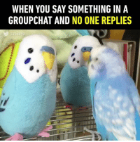 9gag, Memes, and Twitter: WHEN YOU SAY SOMETHING IN A  GROUPCHAT AND NO ONE REPLIES 🔊 I'm Mr Lonely, I have nobody 🐦Follow @9gag - - 📹 pap3oyo | Twitter - 9gag relatable