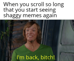 im back: When you scroll so long  that you start seeing  shaggy memes again  I'm back, bitch!