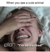 """Cute Animals, Memes, and Ellen: When you see a cute animal  ellen """"I'm so excited!"""" so many emotions"""