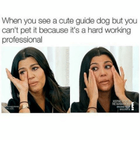 my last 3 posts were about animals too but oh well -F: When you see a cute guide dog but you  can't pet it because it's a hard working  professional  KEEPING  THE KARDASHIRM my last 3 posts were about animals too but oh well -F