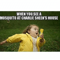 Relax, I'm not evil, nor cruel, I am a reposter: WHEN YOU SEE A  MOSQUITO AT CHARLIE SHEEN'S HOUSE Relax, I'm not evil, nor cruel, I am a reposter