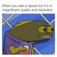 """Memes, Magnificent, and Resolution: When you see a repost but it's in  magnificent quality and resolution <p>This is probably a repost. via /r/memes <a href=""""https://ift.tt/2HBi1TT"""">https://ift.tt/2HBi1TT</a></p>"""