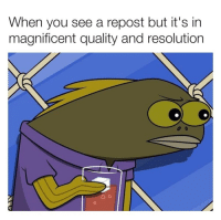 Magnificent, Irl, and Me IRL: When you see a repost but it's in  magnificent quality and resolution Me irl