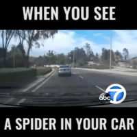 @mrstealyourmemes.tv: WHEN YOU SEE  A SPIDER IN YOUR CAR @mrstealyourmemes.tv