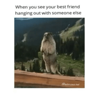tb tag your friends (@hilarious.ted): When you see your best friend  hanging out with someone else tb tag your friends (@hilarious.ted)