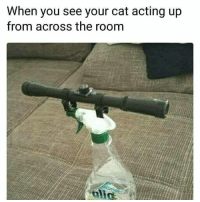 """Memes, Http, and Acting: When you see your cat acting up  from across the room <p>Pew pew via /r/memes <a href=""""http://ift.tt/2pF1Kot"""">http://ift.tt/2pF1Kot</a></p>"""
