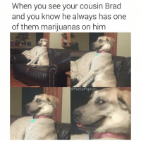 Memes, Blaze, and 420 Blaze It: When you see your cousin Brad  and you know he always has one  of them marijuanas on him  @Pablo Pigasso ut oh we're gonna 420 blaze it (rp @pablopiqasso 👈 this account is so good follow follow follow)