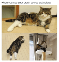 Crush, Memes, and 🤖: when you see your crush so you act natural