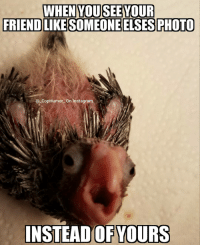 WHEN YOU SEE YOUR  FRIENDLIKESOMEONE ELSES PHOTO  (a Cop Humor on Instagram  E  INSTEAD OF YOURS Hey @myloveformyflock Skittles is cute lol CopHumor CopHumorLife Humor Funny Comedy Lol Baby Birds BirdsOfInstagram Friend Friends Like