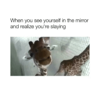 Follow @basicbitch for more 🦒: When you see yourself in the mirror  and realize you're slaying Follow @basicbitch for more 🦒