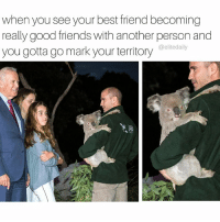 That koala is all of us 🐨: when you seeyour best friend becoming  really good friends with another person and  you gotta go mark your territory  elitedaily That koala is all of us 🐨