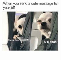 Bitch, Cute, and Memes: When you send a cute message to  your bff  Wanna hea a secret?  U a bitch Pass it on 😊 Follow @confessionsofablonde @confessionsofablonde @confessionsofablonde @confessionsofablonde