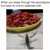 Memes, Celebrated, and 🤖: When you sleep through the apocalypse  but have no one to celebrate with what in crustacean ?!! (@highfiveexpert is too funny - check him out 🍤🔥 follow follow @highfiveexpert )