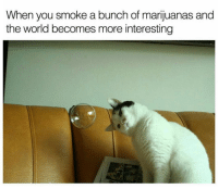 This bubble is clearly a metaphor.: When  you smoke a bunch of marijuanas and  the world becomes more interesting This bubble is clearly a metaphor.