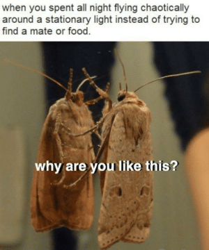 Dank, Food, and Memes: when you spent all night flying chaotically  around a stationary light instead of trying to  find a mate or food  why are you like this? me irl by KevlarYarmulke MORE MEMES