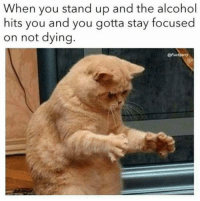 Alcohol, You, and Stay: When you stand up and the alcohol  hits you and you gotta stay focused  on not dying  Fuckery .