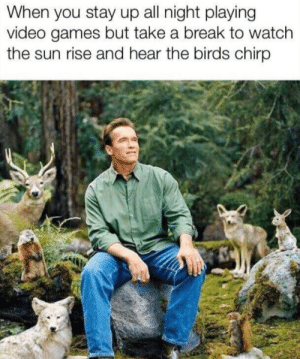 Video Games, Birds, and Break: When you stay up all night playing  video games but take a break to watch  the sun rise and hear the birds chirp Truly gamers don't need sleep