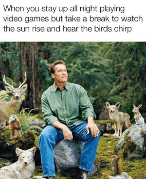 Video Games, Birds, and Break: When you stay up all night playing  video games but take a break to watch  the sun rise and hear the birds chirp