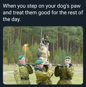 Dank, Dogs, and Memes: When you step on your dog's paw  and treat them good for the rest of  the day  0 Please forgive me by Borkin_Bandit MORE MEMES