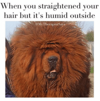 Hermione, Hair, and Girl Memes: When you straightened your  hair but it's humid outside  @MyTherapistSays I'm over here looking like hermione (ok more like hagrid)