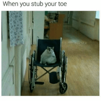 Crying, Memes, and 🤖: When you stub your toe JUST STOP THE CRYING ITS THE SIGN OF THE TIMES
